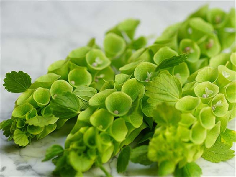 March Flower Spotlight: Bells of Ireland