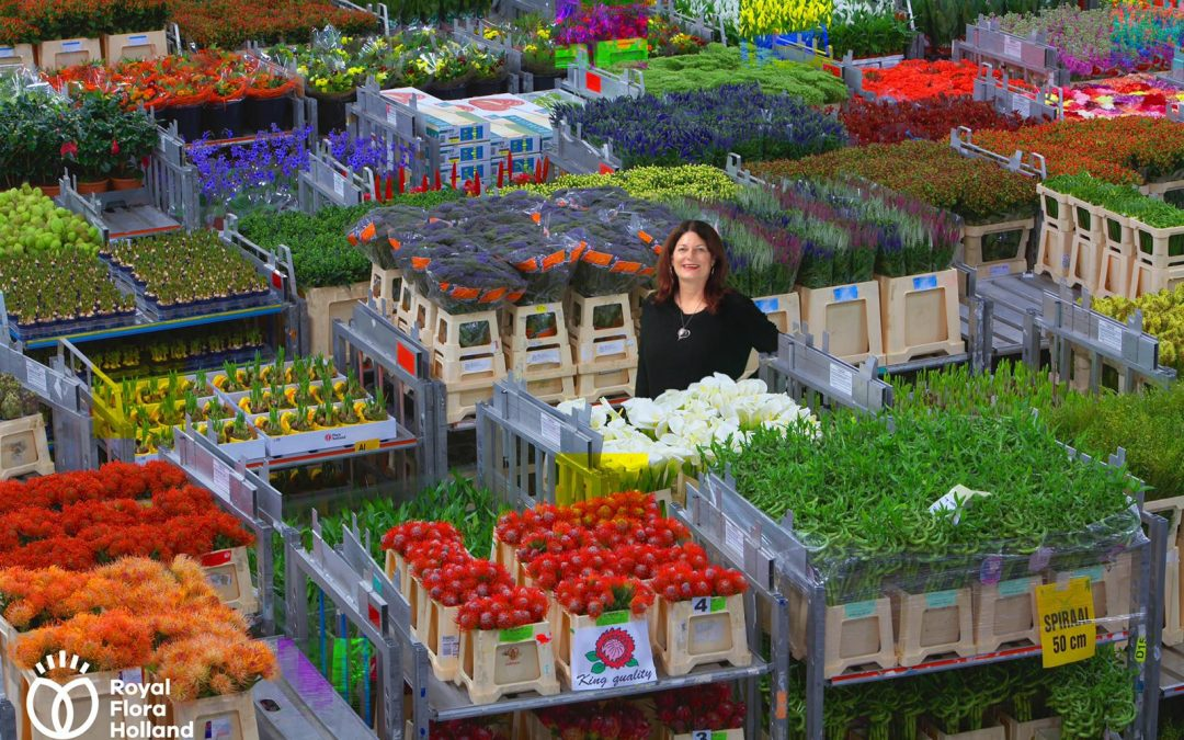 The FloraHolland Auction