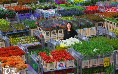 The FloraHolland Auction